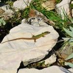 Zvířata a příroda - Naučná stezka Biserujka