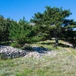 Sedlo Lipica, příroda na ostrově Krk