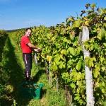 Vinohrad - Vinný sklípek Čubranić